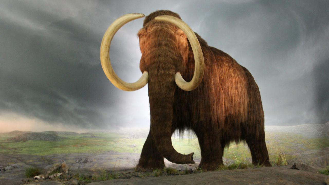 Без женского предводительства самцы мамонтов чаще погибали в ловушках