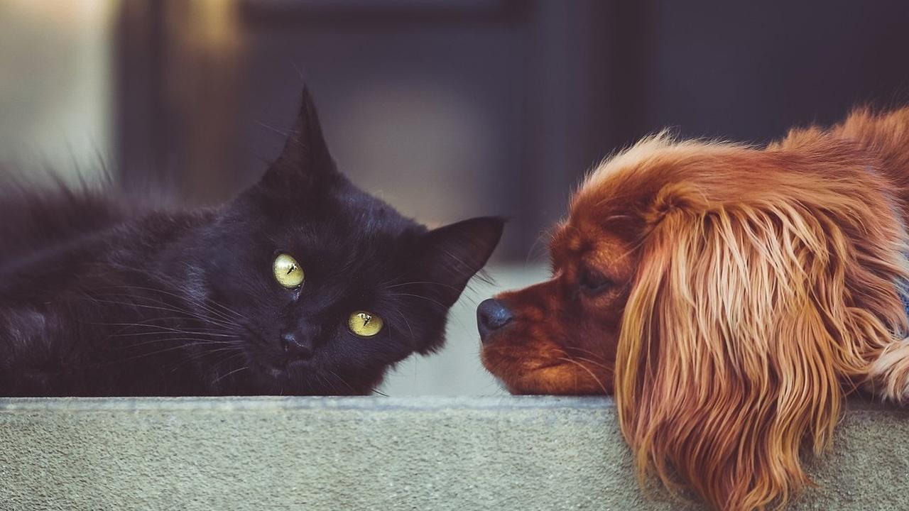 Битва умов: учёные впервые подсчитали число нейронов в мозге кошек и собак