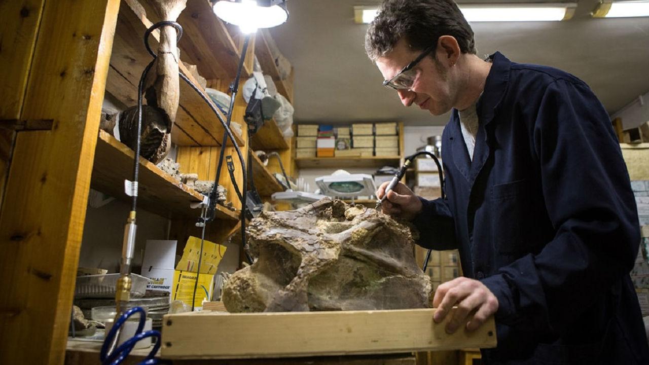 Неизвестный науке род динозавров назвали сибиротитаном