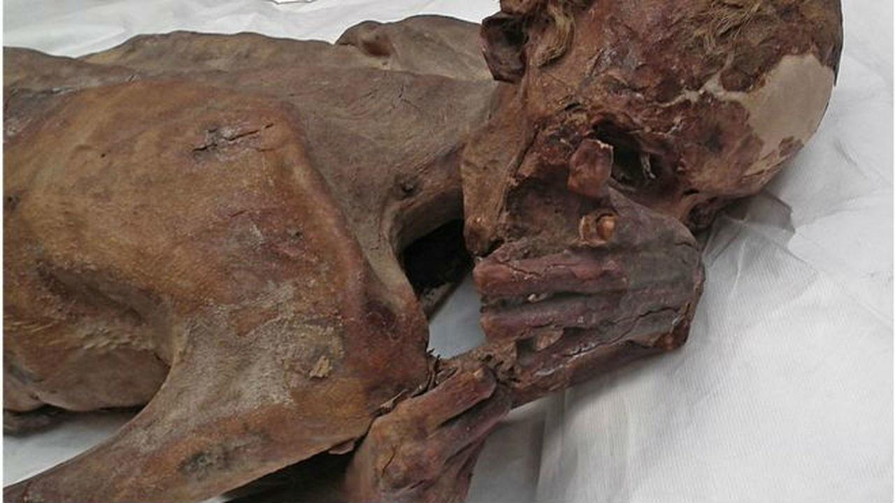 На египетских мумиях найдены древнейшие татуировки с изображением рогатых животных