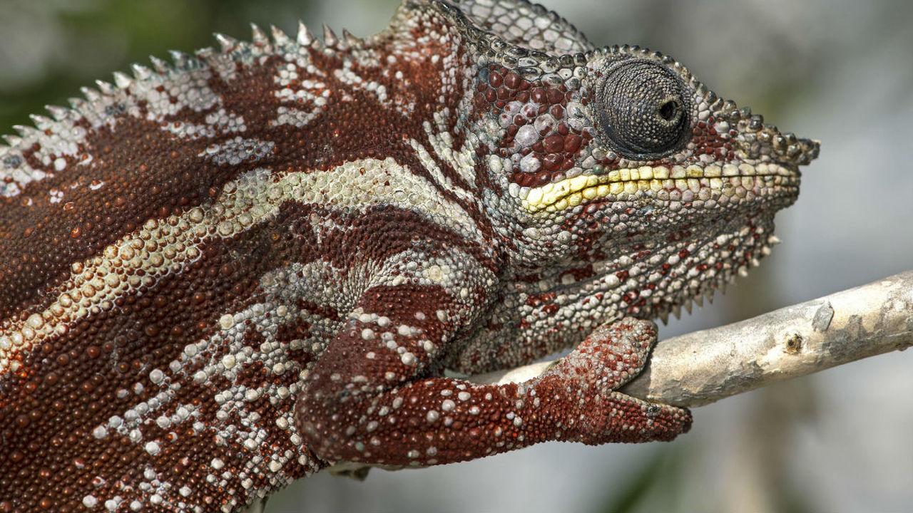 """В МГУ создали """"материал-хамелеон"""", который меняет не только цвет, но и прочность"""