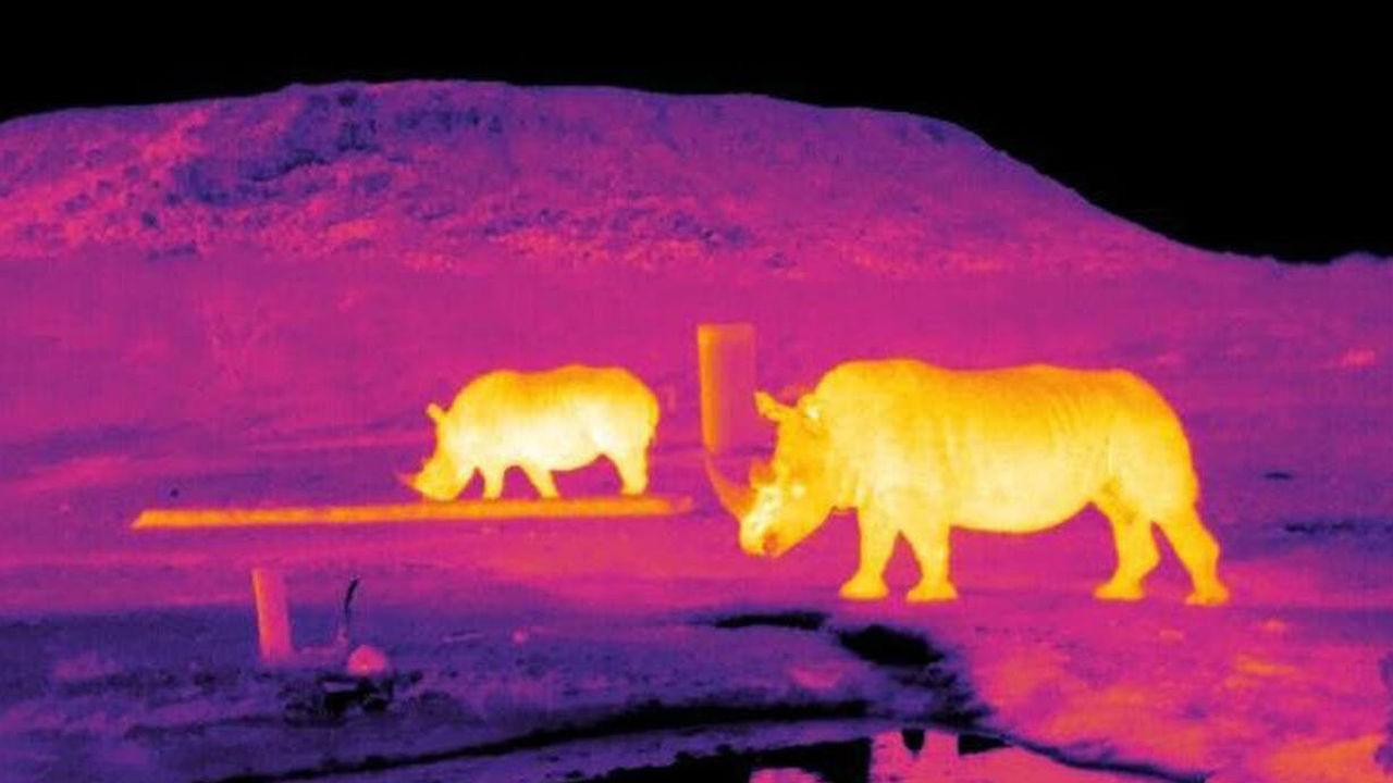 Ради спасения редких животных защитники дикой природы обратились к астрономии