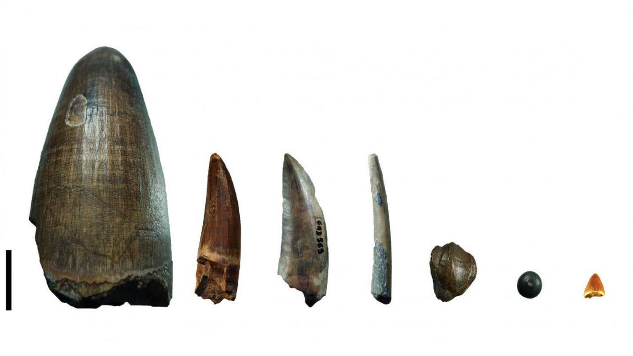 Откуда столько крупных хищников среди динозавров, стало ясно после анализа их зубов