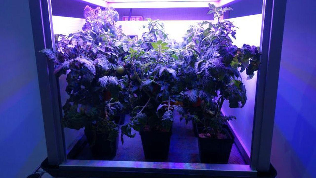 Специалисты NASA уверены – регулярному растениеводству в космосе быть