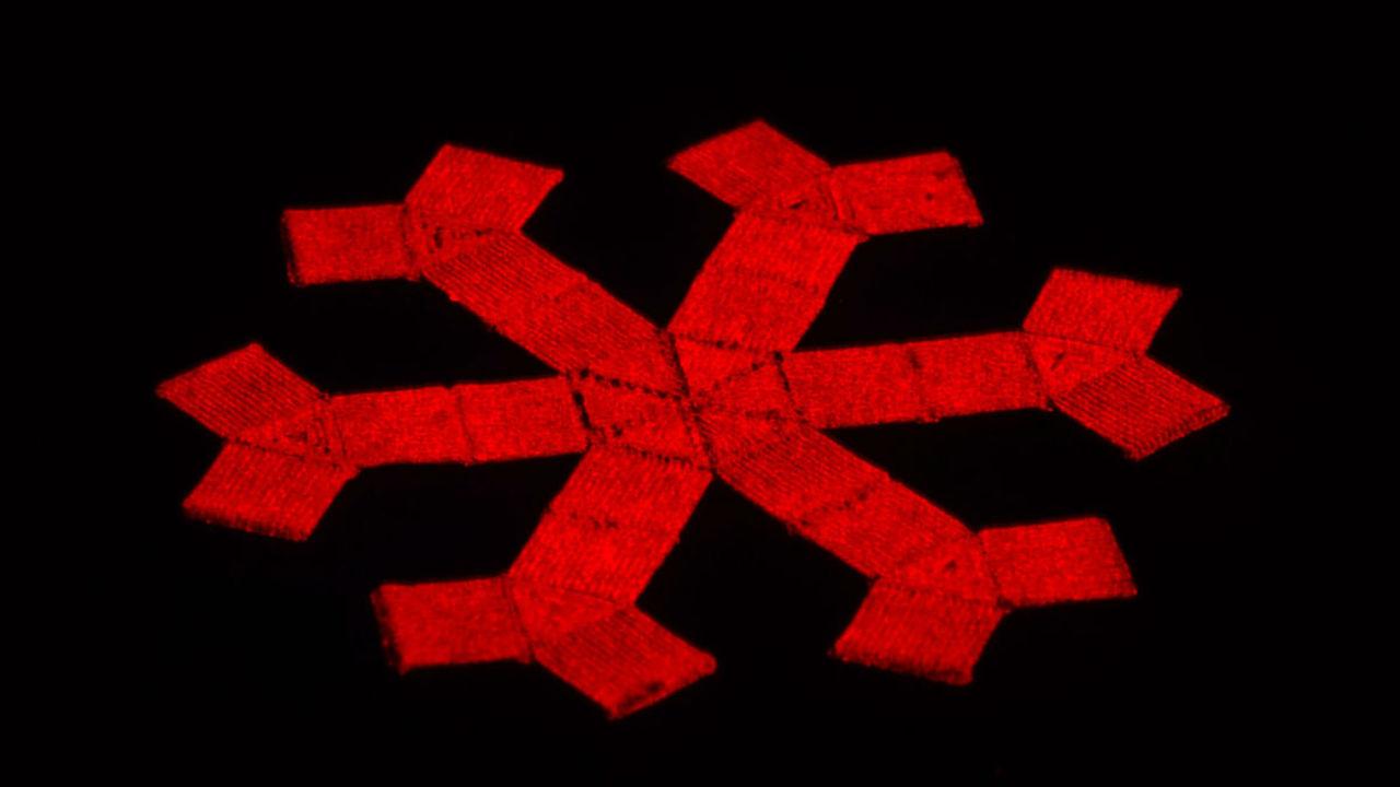 На 3D-принтере напечатали мягких роботов, управляемых магнитным полем