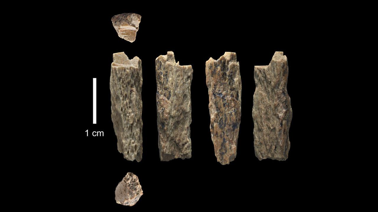 Мать – неандерталец, отец – денисовец: палеонтологи изучили уникальное дитя