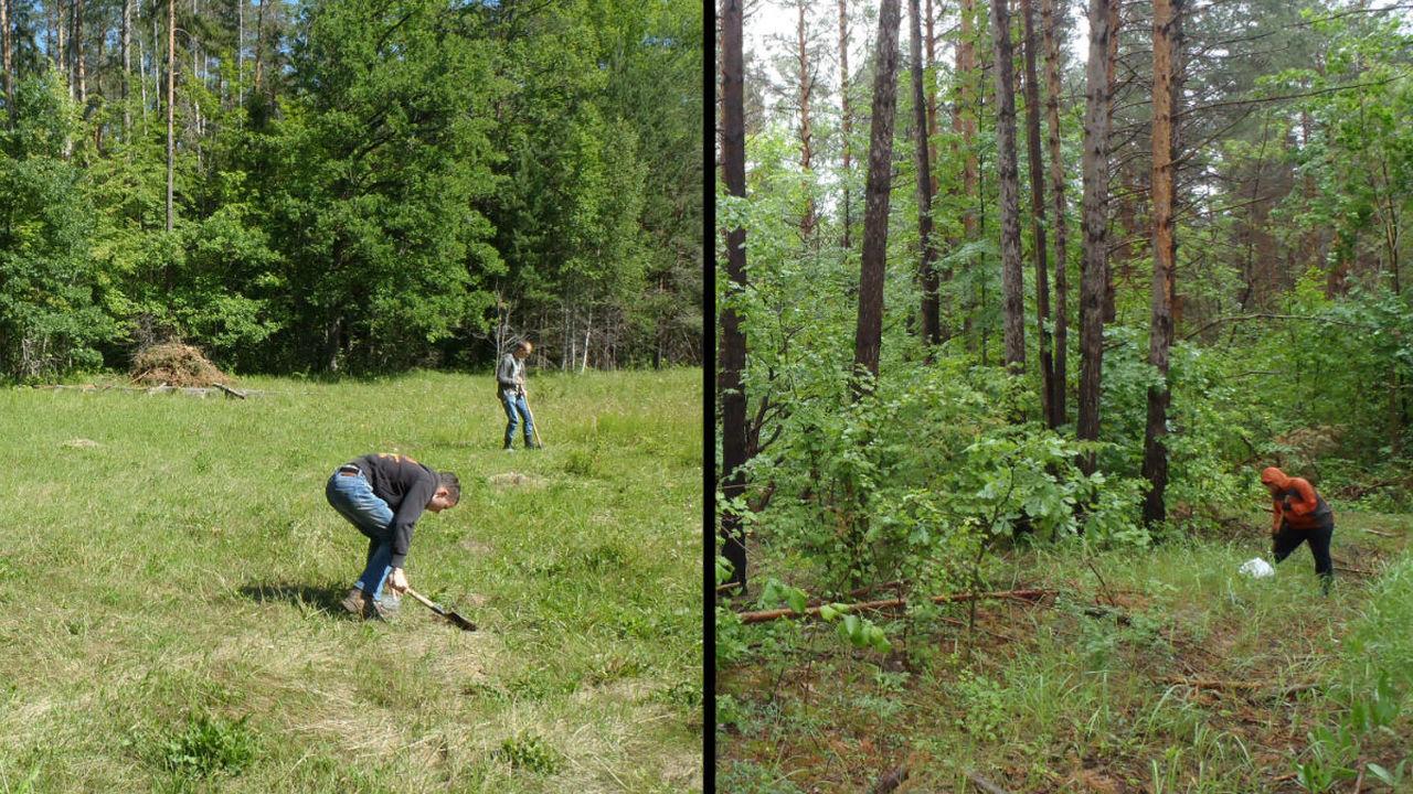 Российские биологи выяснили, как крупнейший в Европе цементный завод влияет на почву и растительность