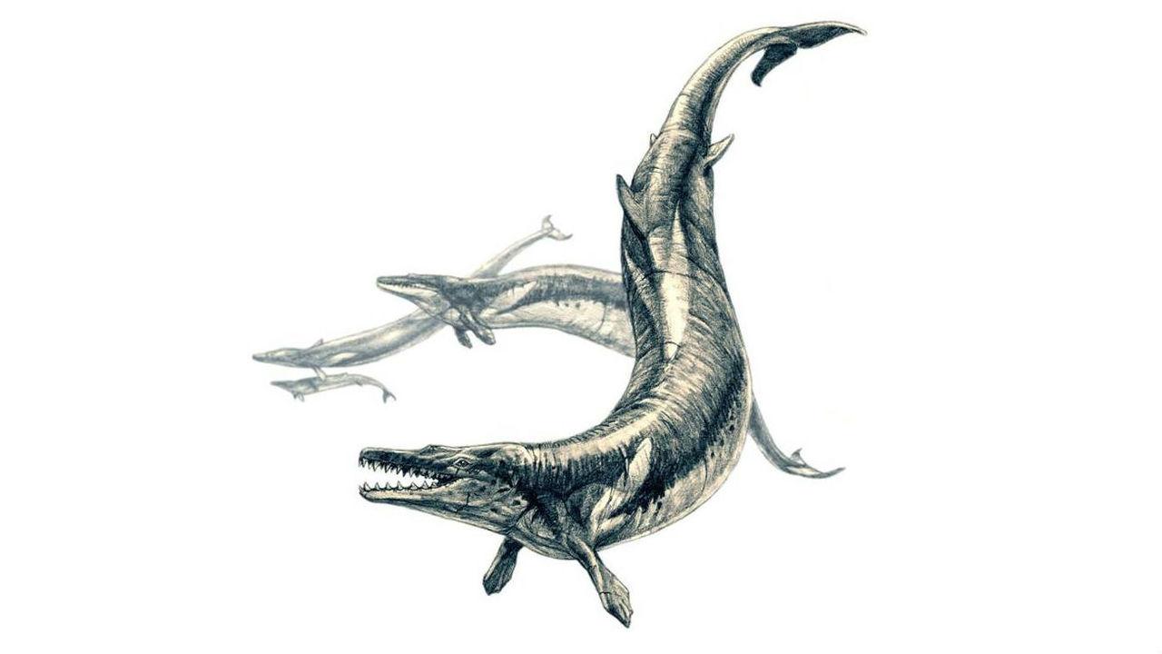 Два в одном: внутри древнего морского суперхищника найдены останки кита