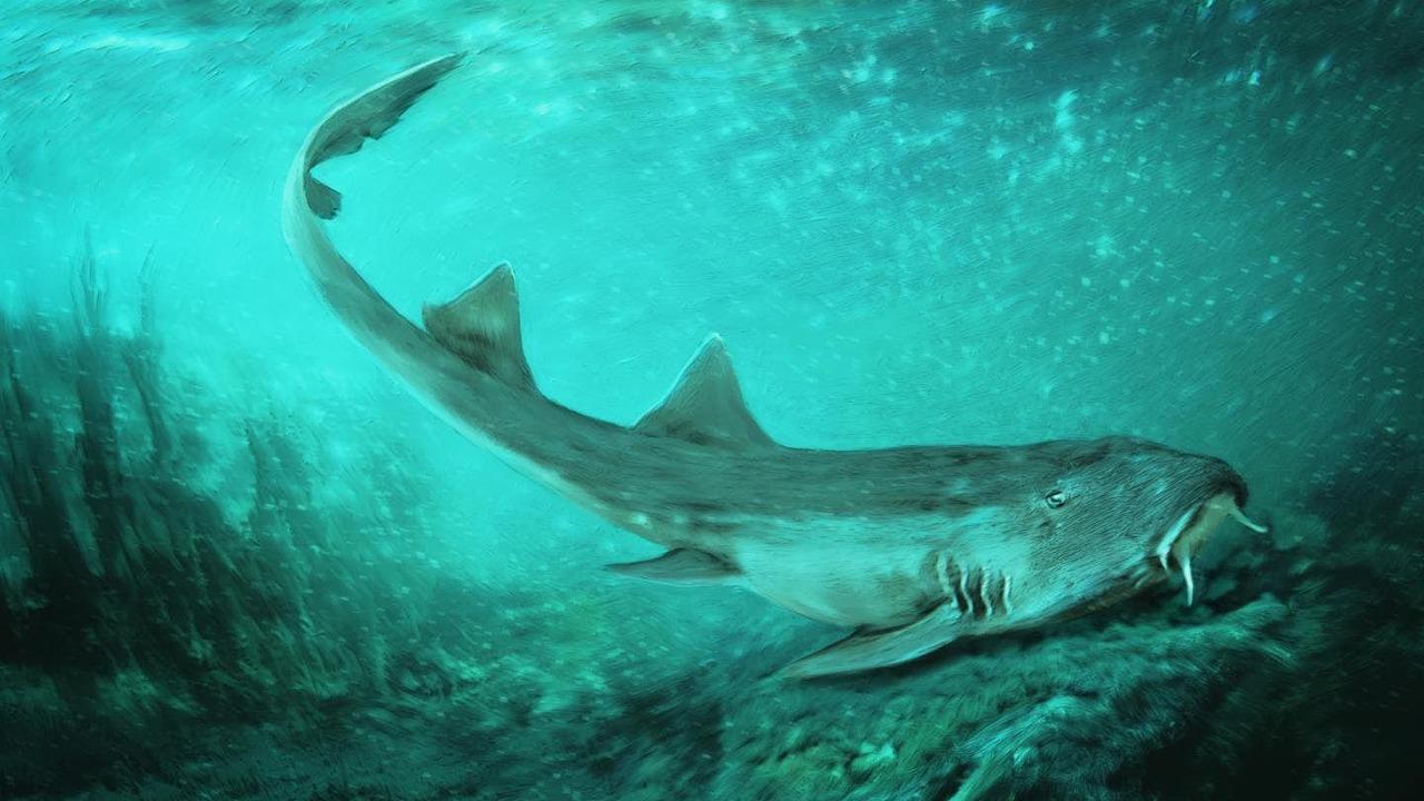 Зубы древней акулы похожи на космические корабли из видеоигры
