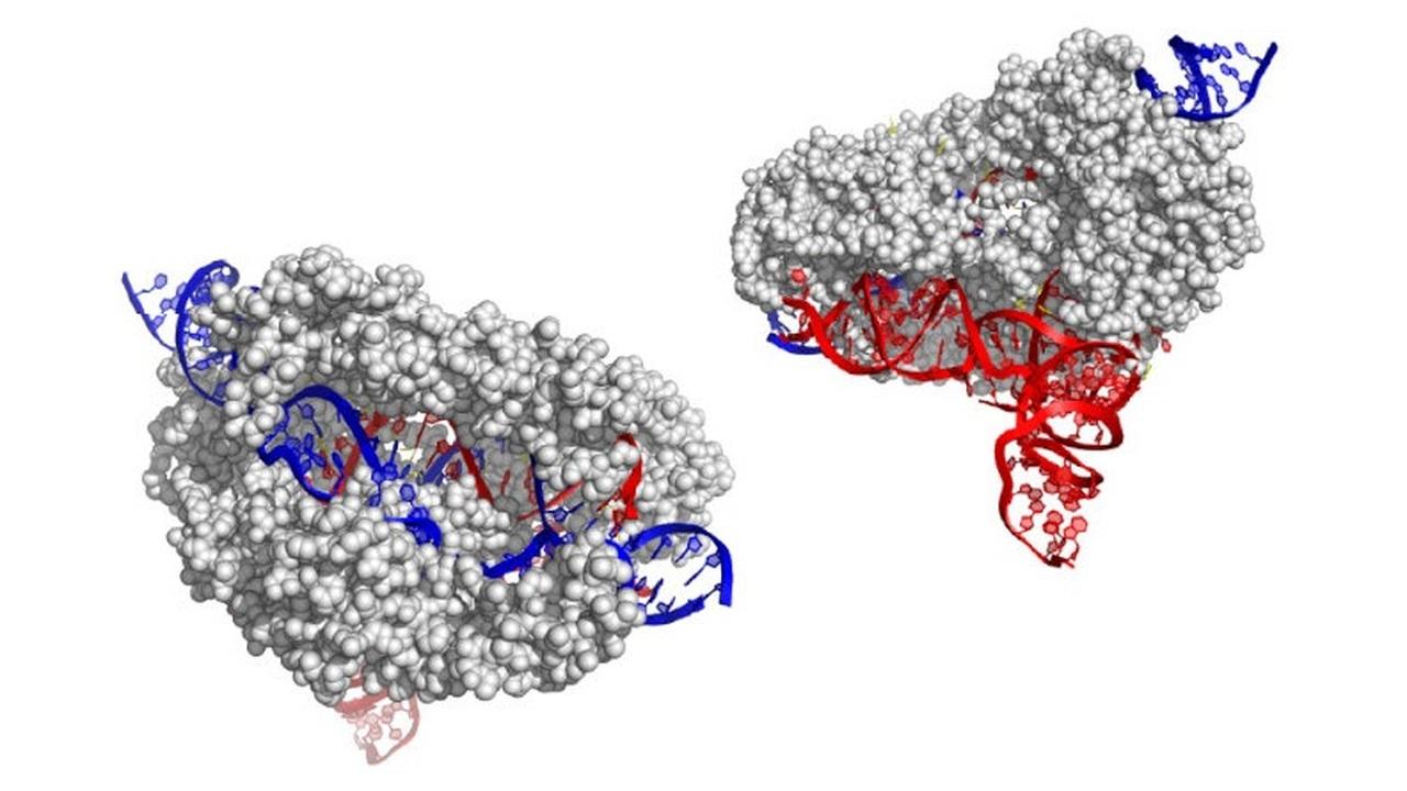 CRISPR тот же, Cas другой: учёные описали новый генный редактор