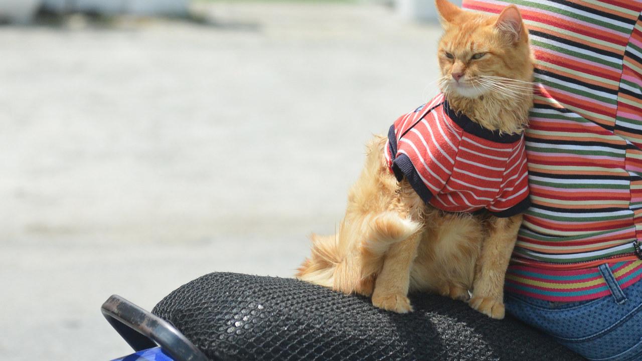 """Если кошка """"невротик"""", то, вероятно, таков и её хозяин"""