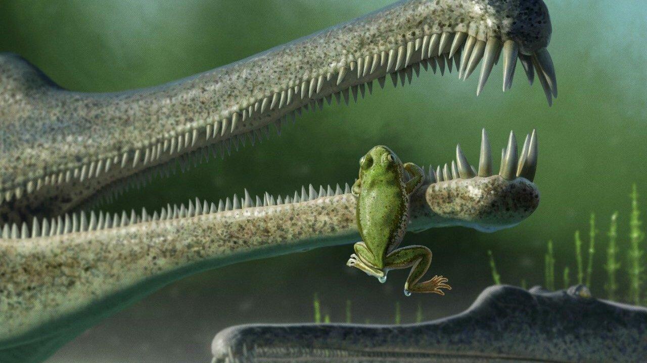 С кончик пальца: найдены останки родственника лягушки, обитавшего на планете во времена динозавров