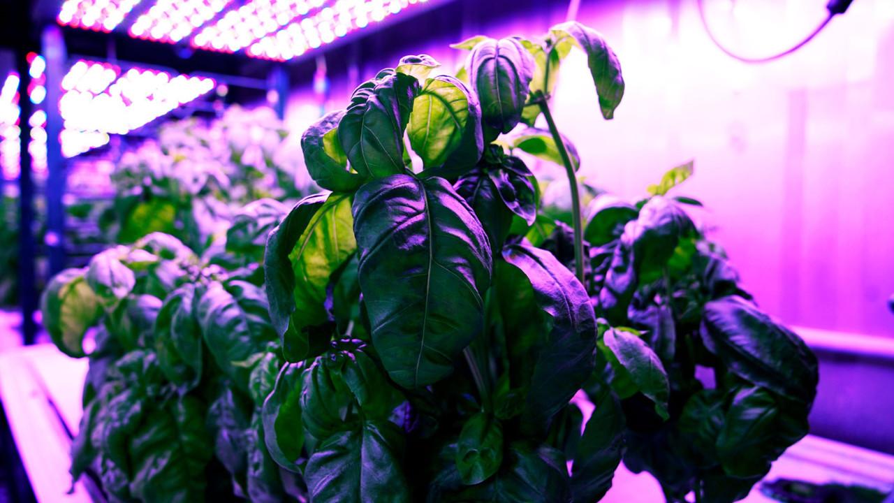Киберфермерство: машинное обучение подскажет, как улучшить вкус растений