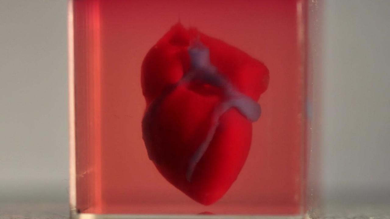 """Из человеческих клеток впервые напечатали полноценное сердце. Правда, в """"мини-формате"""""""
