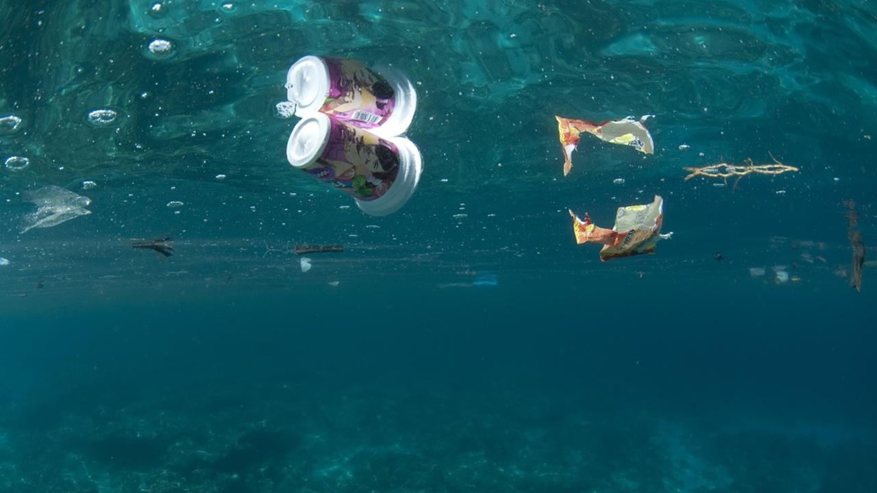 Микрожертвы глобального загрязнения: пластик губит морские бактерии, производящие кислород