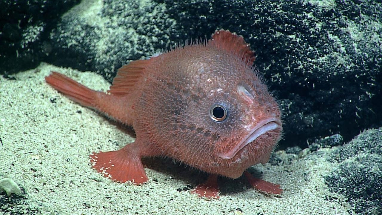 """Впервые обнаружены рыбы, которые """"задерживают дыхание"""" под водой"""