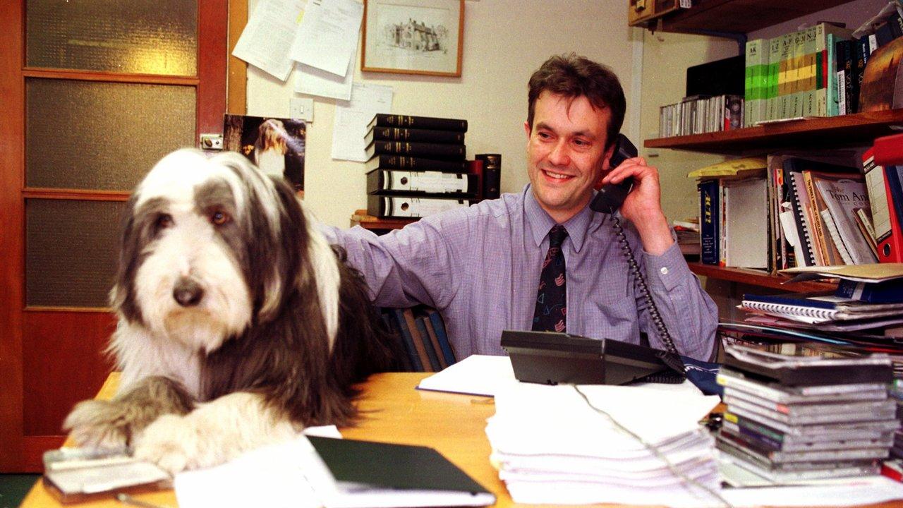Работодателям понравится: учёные выяснили, чем хороша собака на работе