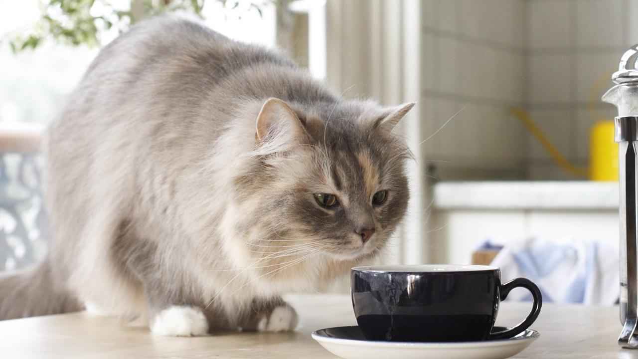 19 миллионов кошек помогли узнать, как меняется вес этих домашних животных на протяжении жизни