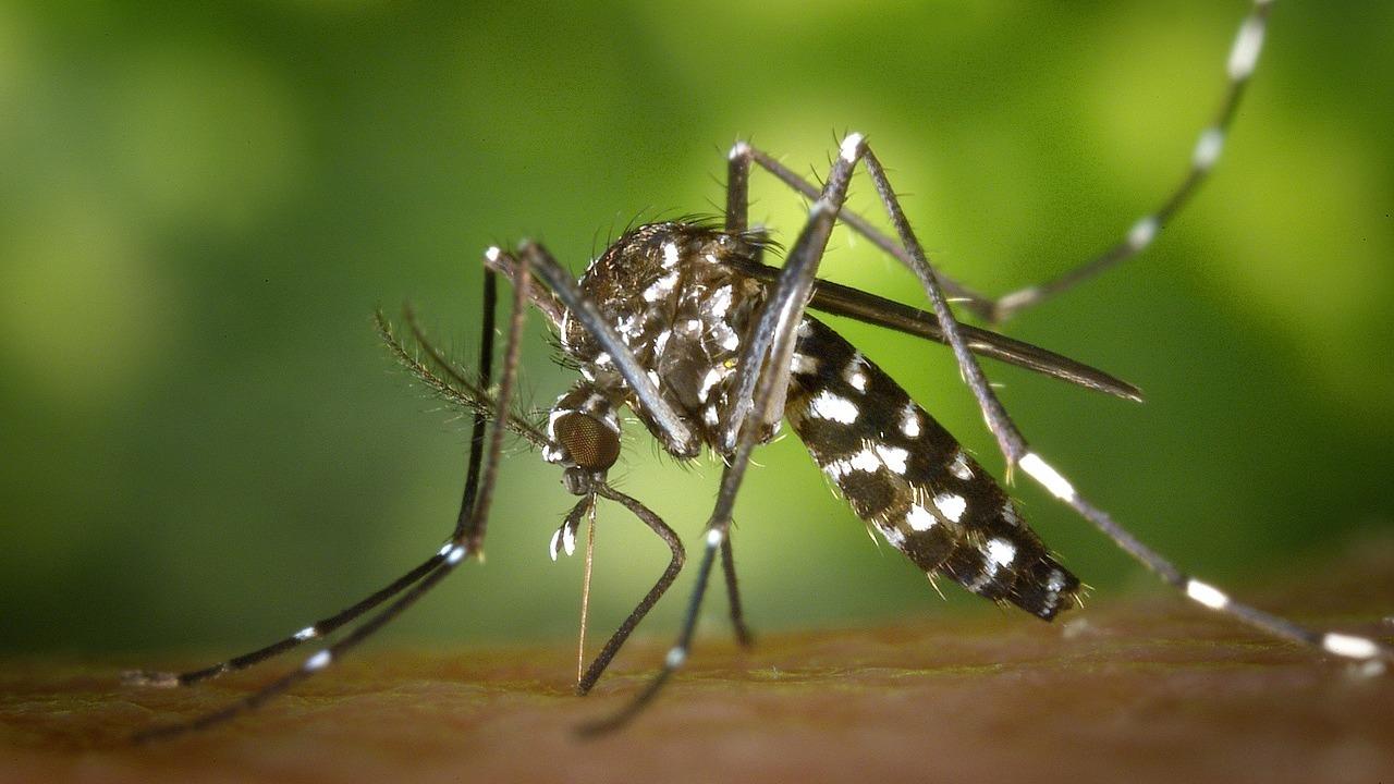 Радиация и биологическое оружие: в Китае уничтожают самых заразных в мире комаров