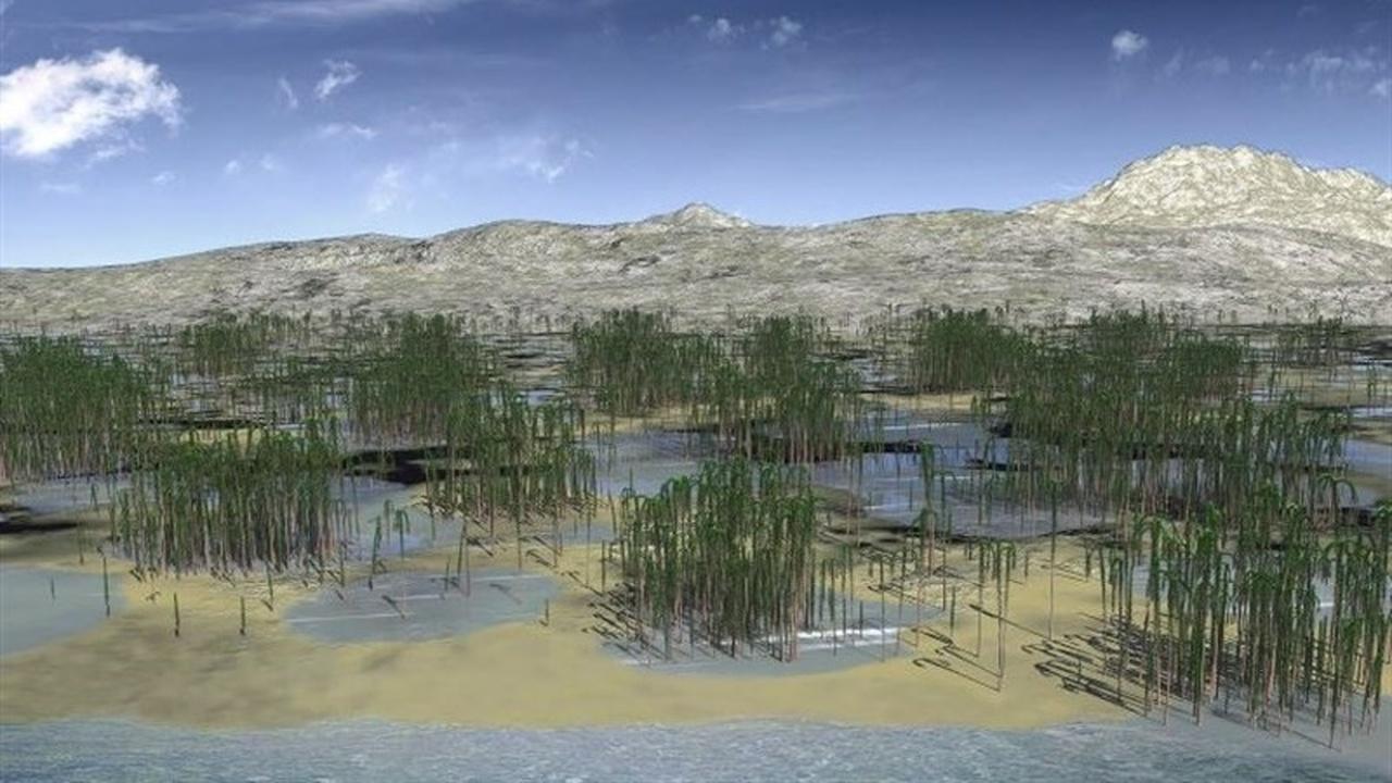 В Китае найден древнейший в Азии ископаемый лес