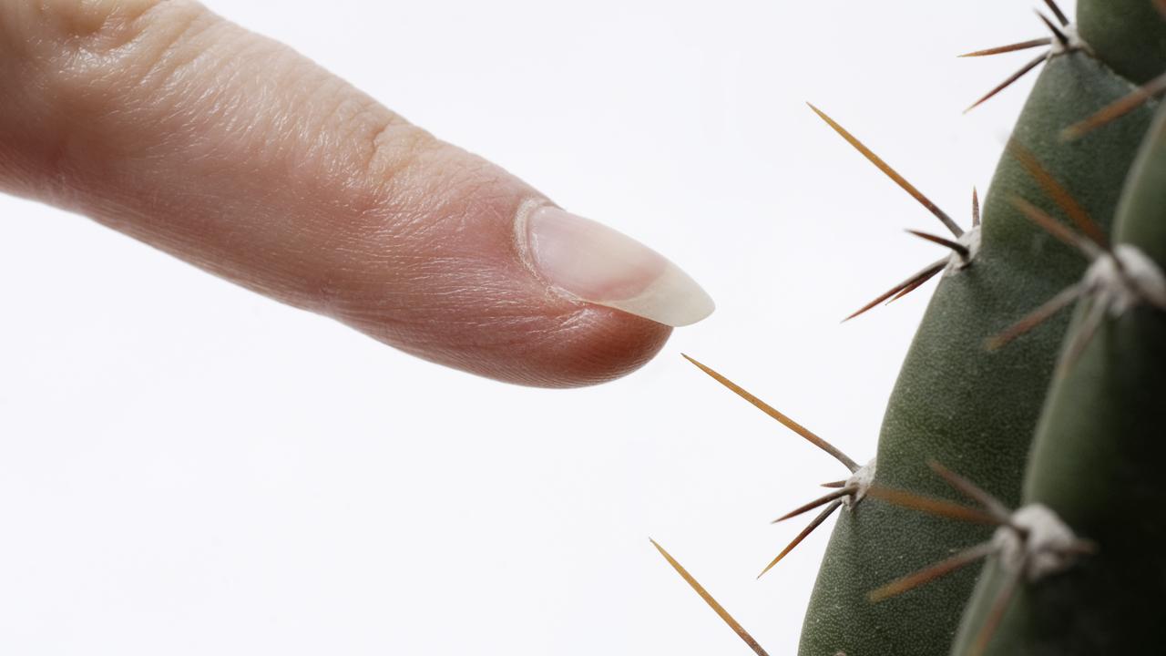 В коже обнаружен новый орган, который помогает чувствовать боль