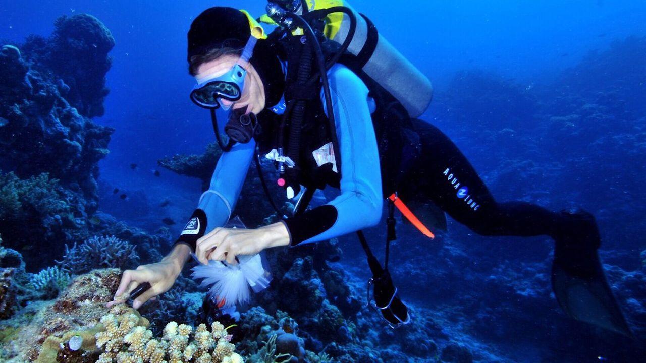 Ключ к лечению устойчивого туберкулёза учёные нашли на морском дне