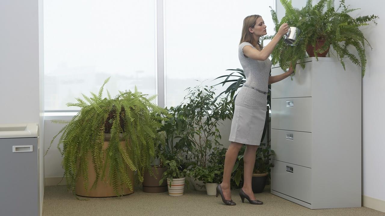 Комнатные растения не спасут от загрязнённого воздуха