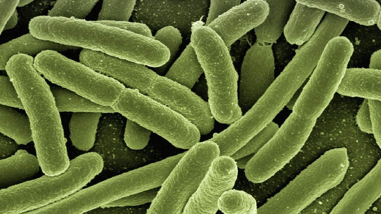 Бактерий приучили питаться углекислым газом