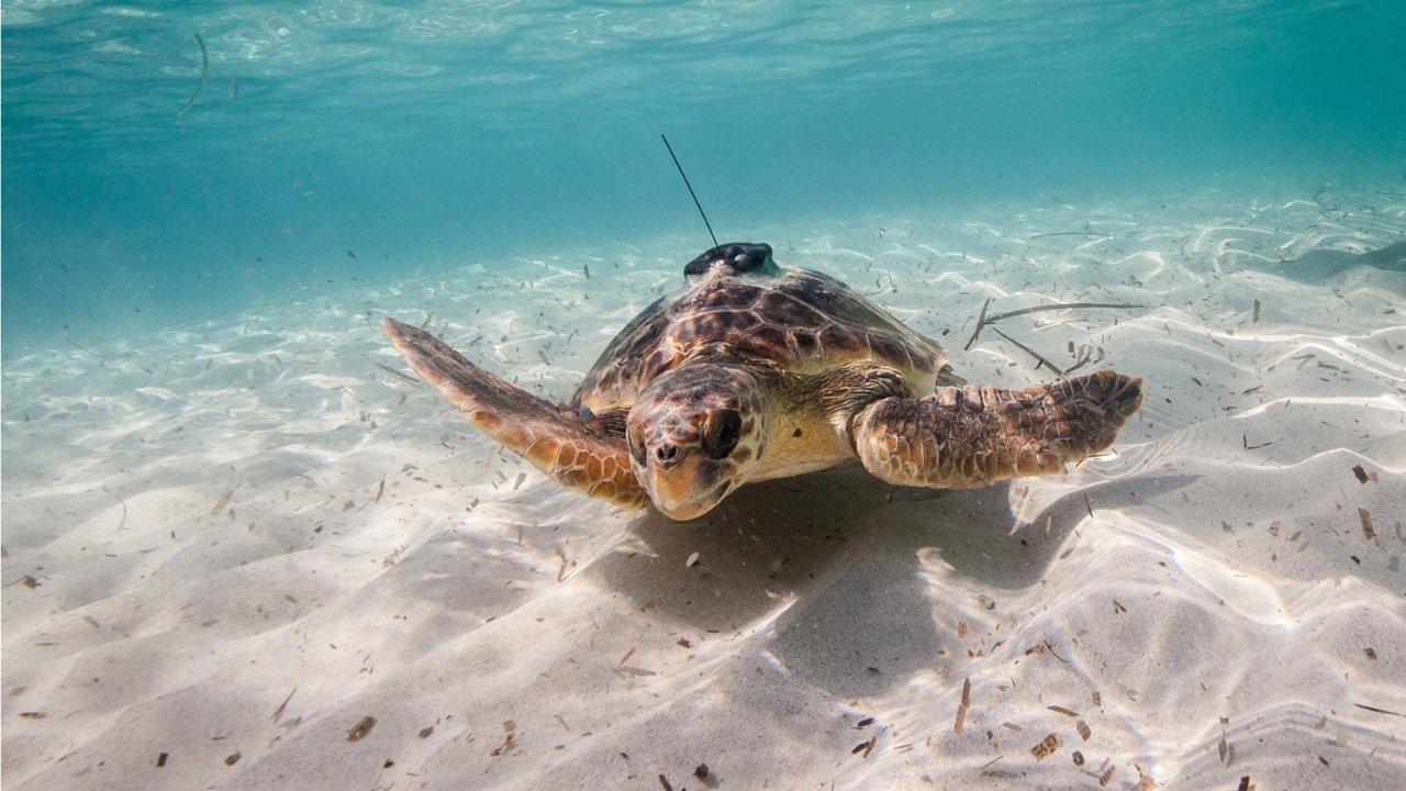 Из морских животных сделают океанологов