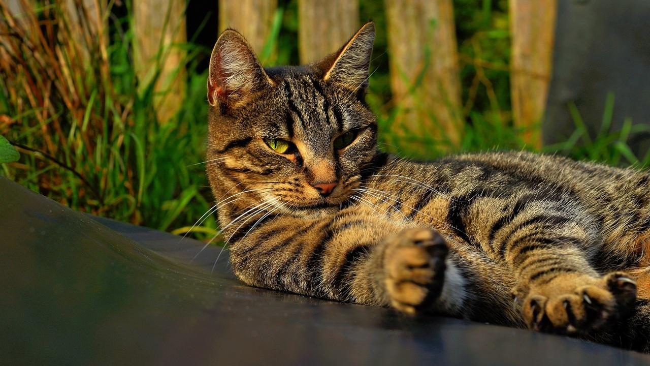 Учёные выяснили, кто лучше остальных понимает эмоции кошек по выражению морды