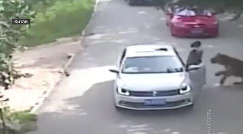 Дочь растерзанной тиграми китаянки требует от сафари-парка 230 тысяч долларов