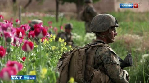 Многомиллиардные прибыли: США устраивает рост производства опиатов в Афганистане
