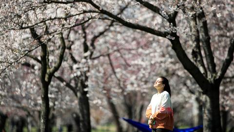 Аллергия на пыльцу: как избежать сезонного обострения