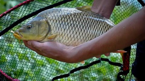 О нормах допустимого содержания мышьяка в рыбе