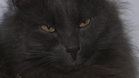 Вести. Кот, сбежавший при посадке на рейс, через полгода вернулся в семью