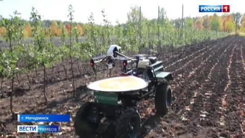 ВестиТамбов. Дачники и садоводы смогут определять болезни яблонь с помощью гаджетов