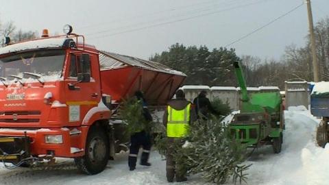 """""""Вести-Калуга"""". Всего 20 новогодних елок принесли на переработку"""