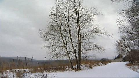 Вести. В Красноярском крае спасли заблудившихся в лесу пенсионеров