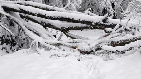 Вести. Из-за ветра и снега оказались заблокированы дороги в Кавказском заповеднике