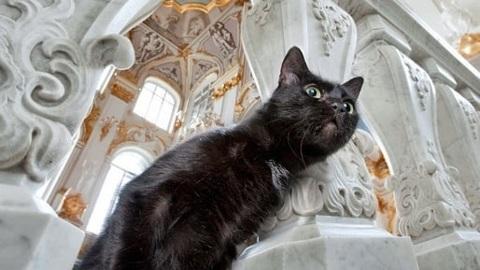 Эрмитажные коты получат наследство от мецената из Франции