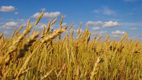 Средняя урожайность зерновых в Забайкалье выросла на 15%