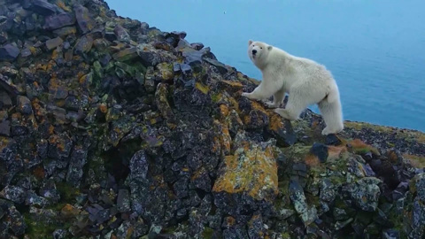 Территория открытий: туристический потенциал Арктики
