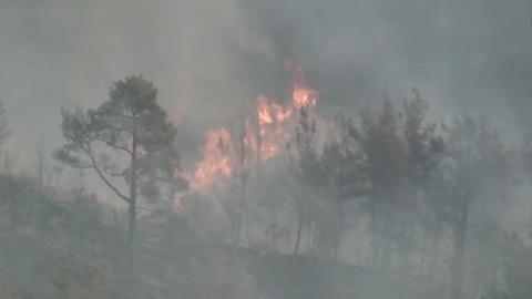 Число погибших при лесных пожарах в Турции возросло до 8, пострадавших – до 854