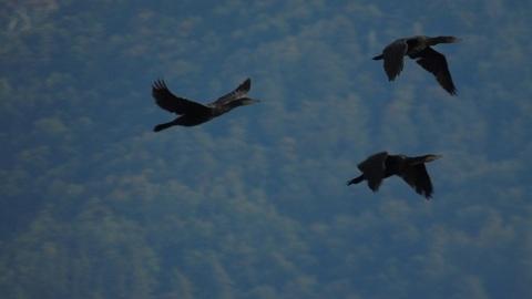 Время лететь на моря: Самарскую область начали покидать перелетные птицы