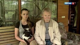 Сикис руский молодой силка фото 762-595