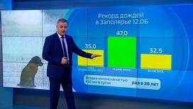 """""""Погода 24"""": что ждет болельщиков в первые дни ЧМ по футболу"""