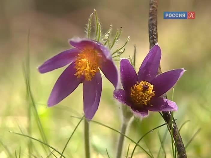 Новости в городе зея амурской области