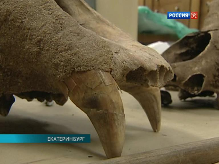 Уральские археологи рассказали о самых интересных находках с.