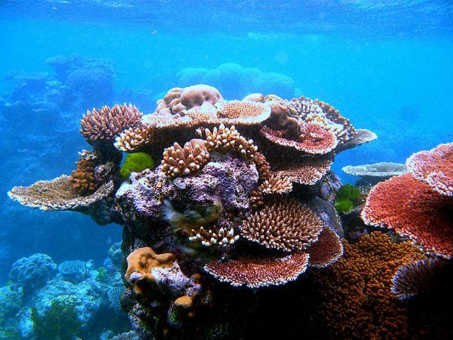 Биоразнообразие Большого Барьерного рифа находится под угрозой из-за расширения угледобывающей промышленности