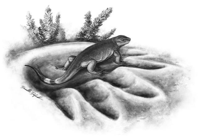 Вид Eocasea martinis − самый ранний предок больших травоядных животных